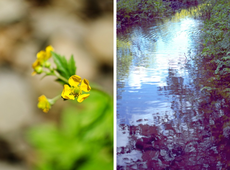yellow flower and rippling pond diptych