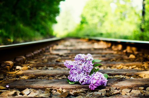 lilac bouquet on railroad