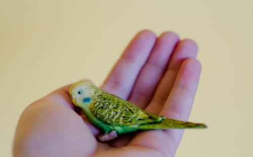 toy parakeet in hand