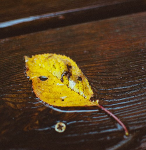 fallen leaf dead sadness damaged stillbirth fall autumn